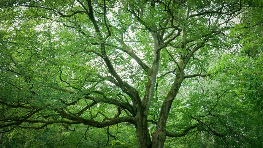 Dein Freund, der Baum